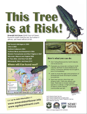 This Tree is at Risk