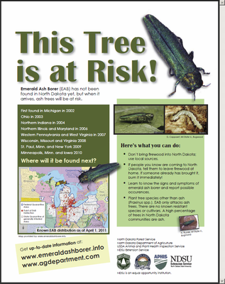 This Ash Tree is at Risk