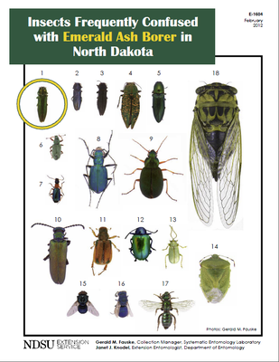 Insects Frequently Confused with Emerald Ash Borer in ND