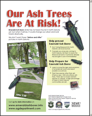 Our Ash Trees are at Risk