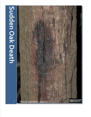 Sudden Oak Death/Ramorum Blight